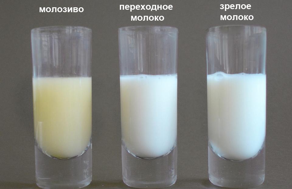 Каким бывает грудное молоко