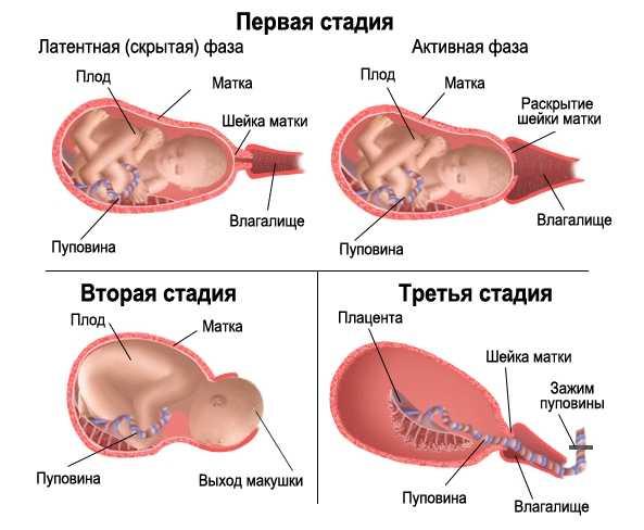 Этапы родов