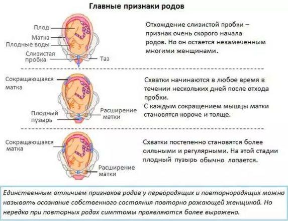 основные признаки родов